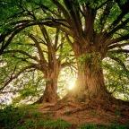 Levande skogar