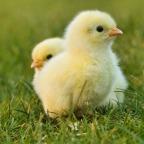 Inga åtgärder från regeringen för att stärka djurskyddet på slakterierna.